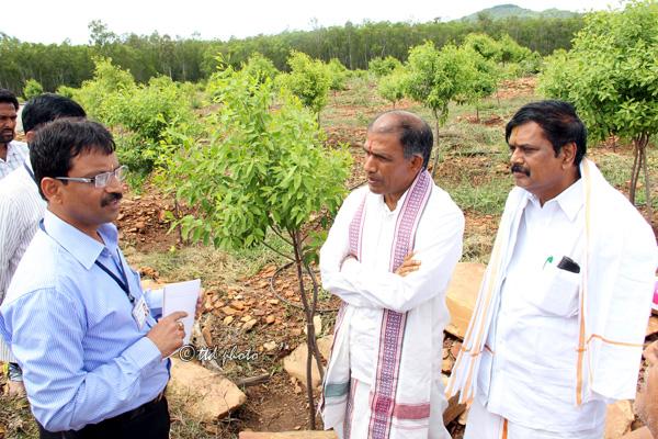 TTD PLANS TO OFFER SANDALWOOD PLANTS TO FARMERS – TTD News