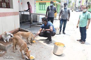 DOG FEEDING1