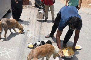 DOG FEEDING2