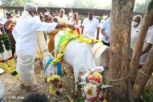 TTD CHAIRMAN DONATES 32 PAIRS OF COW AND CALF TO GUDIKO-GOMATA SCHEME
