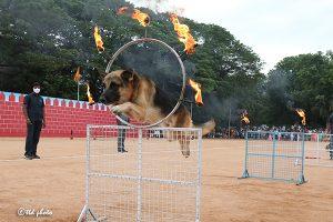 DOG SHOW1